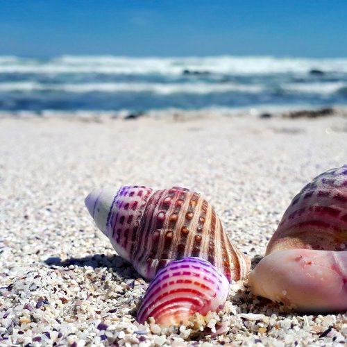 seashell-2821388_1280